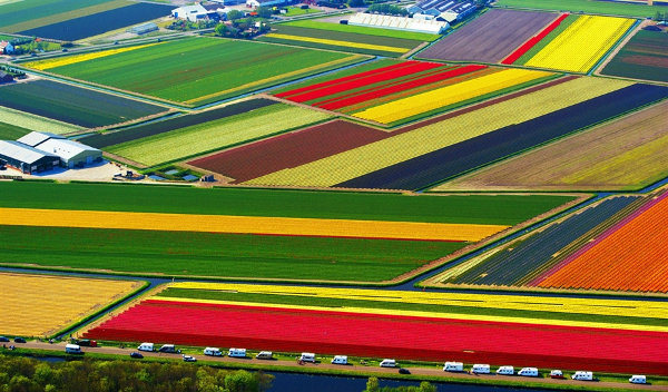 colorful-flower-fields